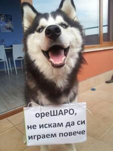 снимка - Павел Колев