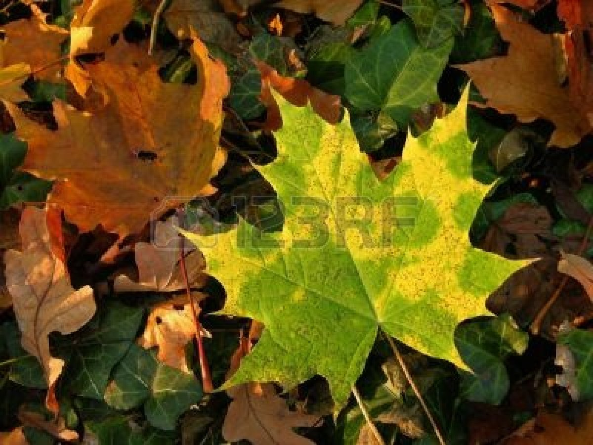 373030-fall-green-and-yellow-autumn-leaves