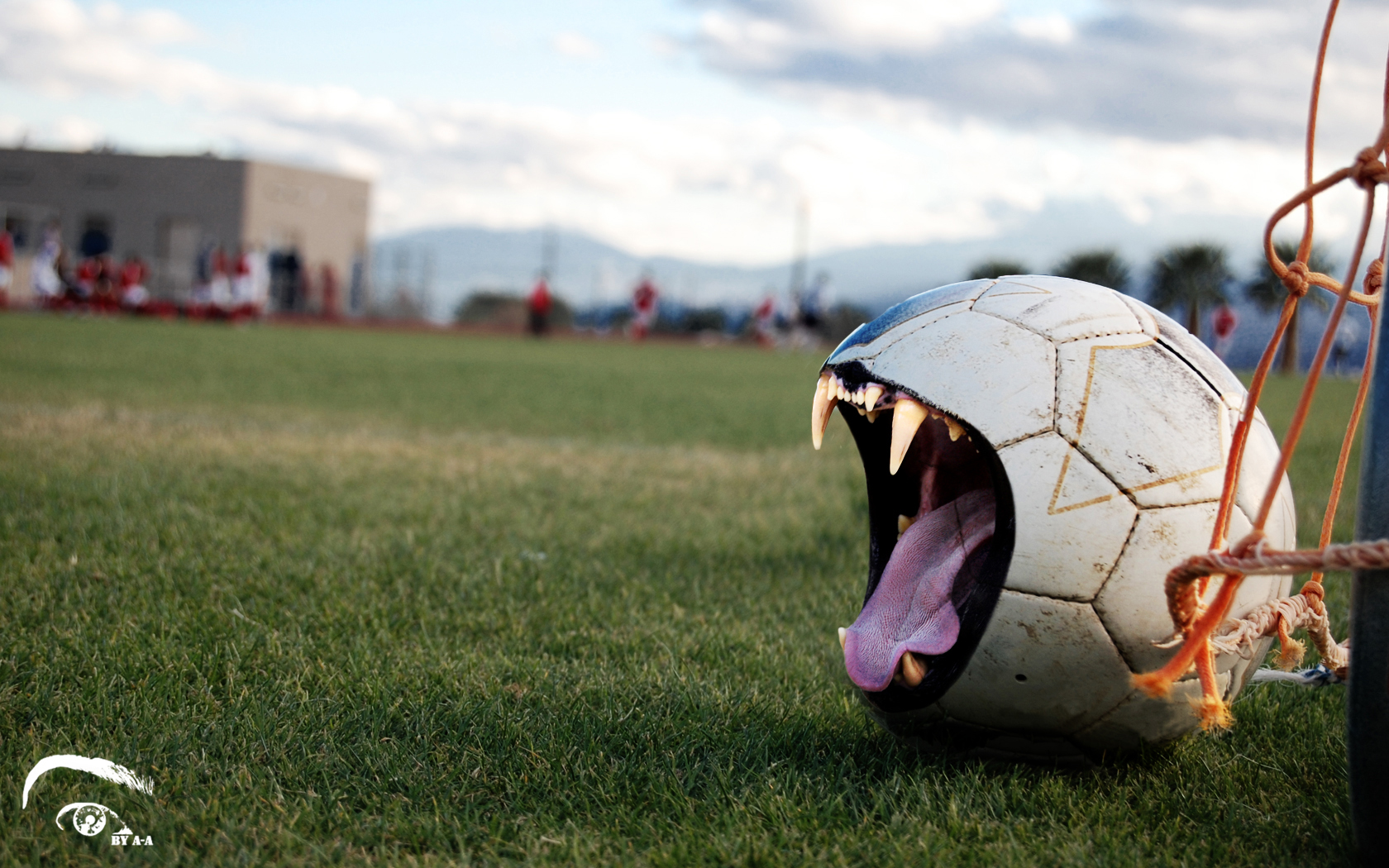 balls_fangs_football_not_soccer_ball_cat_desktop_1680x1050_hd-wallpaper-534091